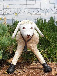 כבשה 1 - ניבה רוזנשטוק